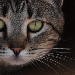 PHOTOGRAPHY: Headshot Kitty