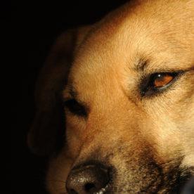 PHOTOGRAPHY: Dog Portraits