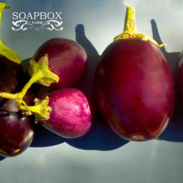 PHOTOGRAPHY: Eggplant Poster
