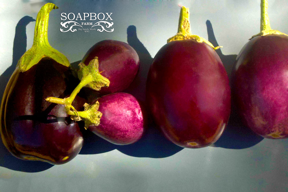 Gary Crossey Photography of Eggplant