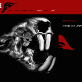 WEBSITE DESIGN: Online Catalog